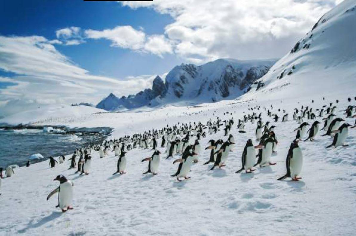 Antarctica home to more penguins than anywhere else on earth.